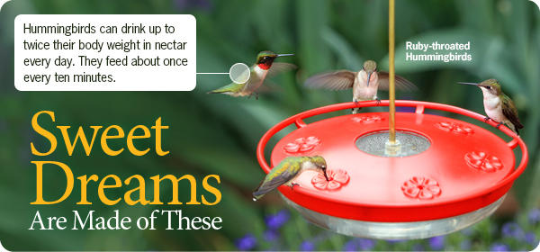 Hummingbird Feeders Sale